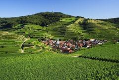 Vogtsburg i. Kaiserstuhl - Blick auf den Totenkopf