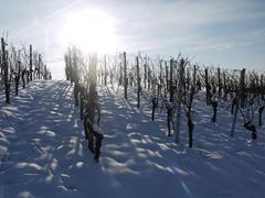 vineyard-1566092_1920
